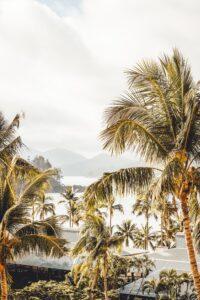 Palm Trees - GP Vacancy Whitsundays